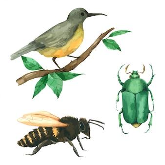 Bug e abelha animal pássaro definir pintura de mão em aquarela