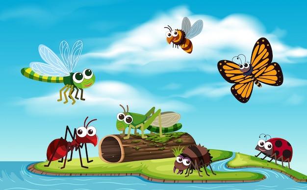 Bug na ilha