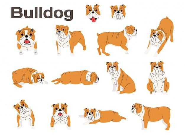 Buldogue, cachorro em ação, cachorro feliz