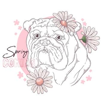 Bulldog com flores isoladas em branco