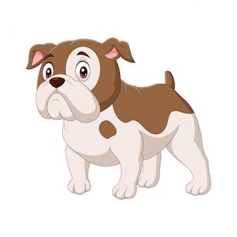 Bulldog de desenhos animados isolado no branco