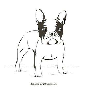 Bulldog esboço