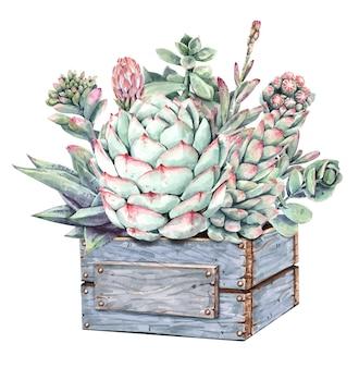 Buquê de cactos e suculentas aquarela com caixa de árvore do plantador de madeira.