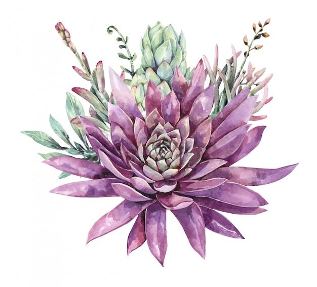 Buquê de cactos e suculentas aquarela. pintura suculenta. flor roxa.