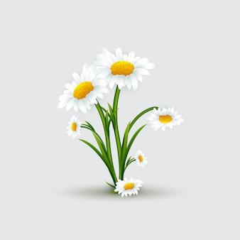 Buquê de chamomiles com folhas