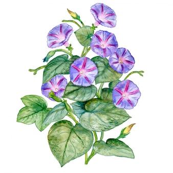 Buquê de flores. aguarela