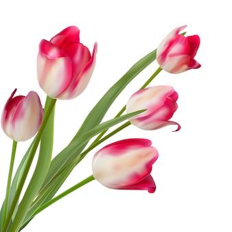 Buquê de três tulipas em um branco.