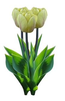 Buquê de tulipa amarela. grupo isolado da flor do vetor. flor 3d realista fresca com folhagem verde dos países baixos. presente do dia das mães. conceito floral elegante.
