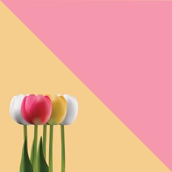Buquê de tulipas bonitas em fundo azul e rosa