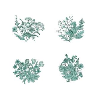 Buquês de ervas medicinais de mão desenhada definir ilustração