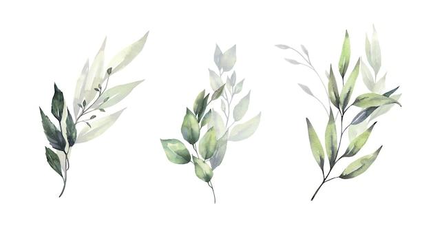Buquês de folhas verdes florais em aquarela.