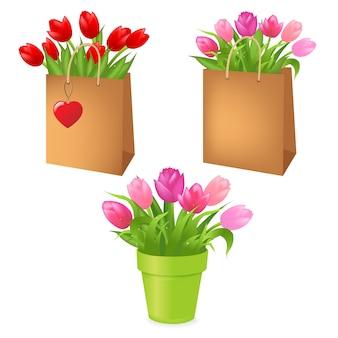 Buquês de tulipas em pacote, sobre fundo branco, ilustração