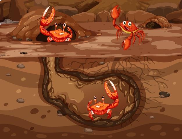 Buraco de animal subterrâneo com muitos caranguejos Vetor grátis