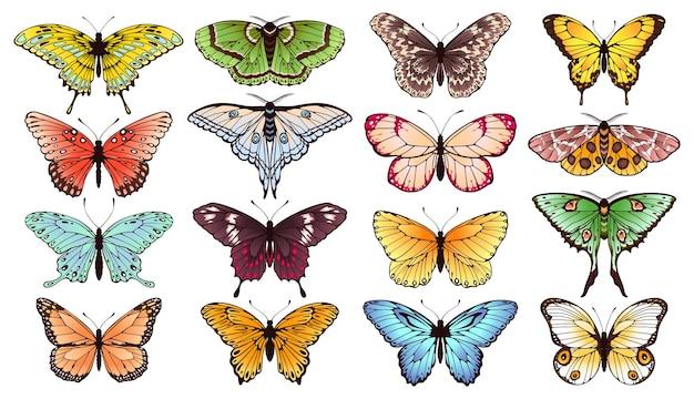 Butterfly spring borboletas insetos com asas coloridas