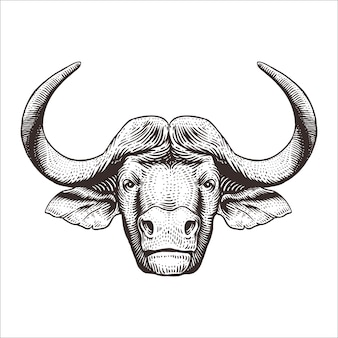 Cabeça búfalo, gravura, ilustração