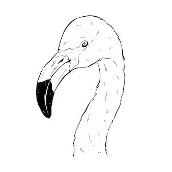 Cabeça de flamingo preto e branco com desenho à mão ou estilo de esboço