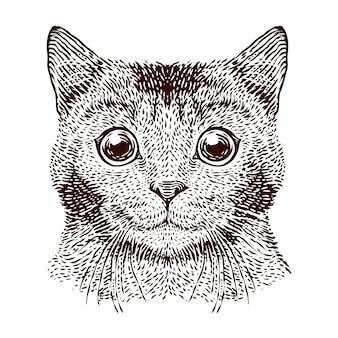 Cabeça de gato vector a ilustração de gravura