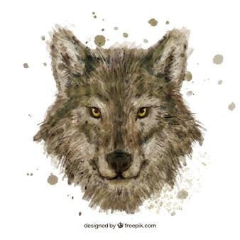 Cabeça de lobo de aquarela