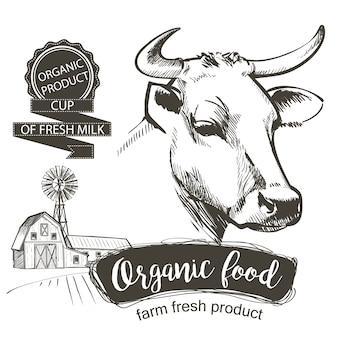 Cabeça de vacas. mão desenhada em um estilo gráfico. ilustração em vetor vintage gravura