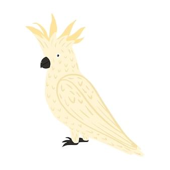 Cacatua de papagaio isolada. cor de pássaro branco bonito personagem tropical.