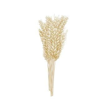 Cacho de espigas de trigo isoladas em branco