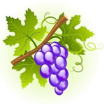 Cacho de uva com folhas verdes