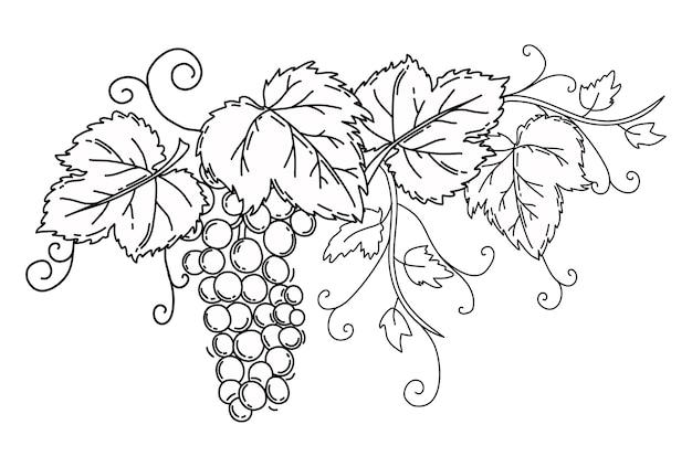 Cacho de uvas com folhas contorno preto sobre fundo branco isolado vine
