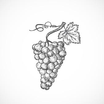Cacho de uvas com ilustração de mão desenhada folha e broto. desenho abstrato de fruta ou baga.