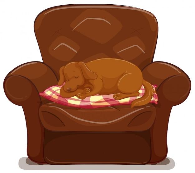 Cachorrinho dormindo no sofá marrom