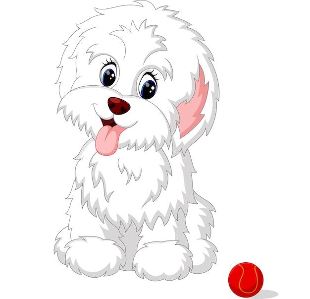 Cachorrinho fofo branco lap-cachorro posando