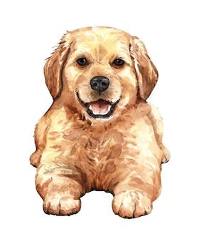 Cachorrinho golden retriever ajoelhado no chão