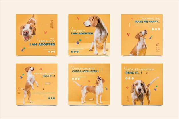 Cachorro adorável adota postagens de instagram de animal de estimação