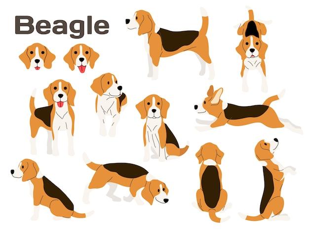 Cachorro beagle em ação