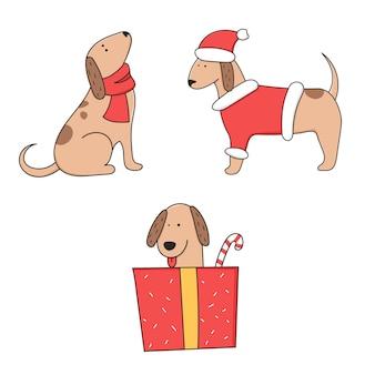 Cachorro com roupa de ano novo e em caixa oferta.