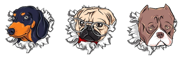 Cachorro de papel rasgado