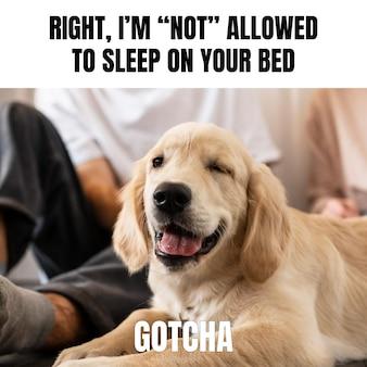 Cachorro engraçado com meme de animal com piscadela