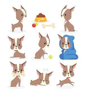 Cachorro engraçado em diferentes ações e posições, rotina diária do cão