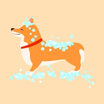 Cachorro feliz e fofo. welsh corgi. lavagem de cachorro. conceito de aliciamento. ilustração vetorial plana