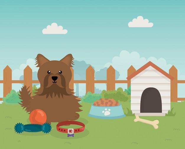 Cachorro marrom com comida de casa e brinquedos pet care
