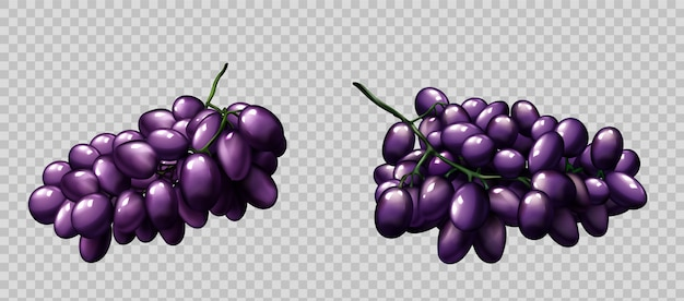 Cachos de uvas realistas conjunto de bagas roxas maduras