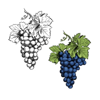 Cachos e folhas de uvas