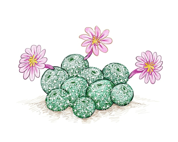 Cacto rebutia com flor rosa uma planta suculenta com espinhos afiados para decoração de jardim