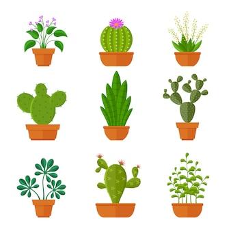 Cactos decorativos com flores e plantas em casa em conjunto de panelas.