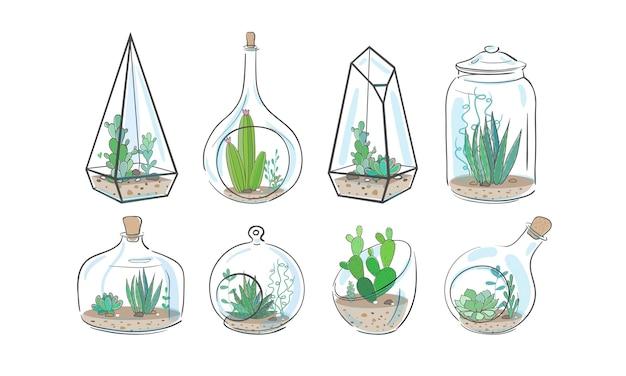 Cactos e plantas suculentas em aquários de vidro e vasos isolados no branco