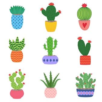 Cactos e plantas suculentas em vasos