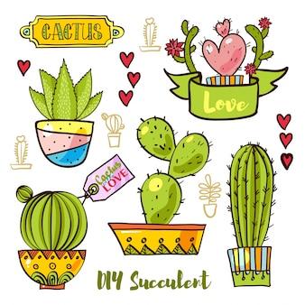Cactos e succulentes em vasos.