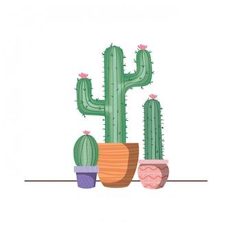 Cactus com vaso