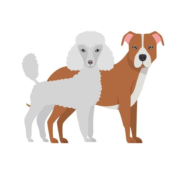 Cães bonitos e adoráveis em branco