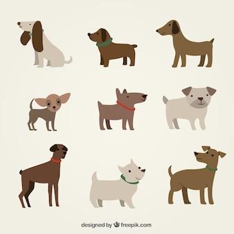 Cães bonitos ilustração
