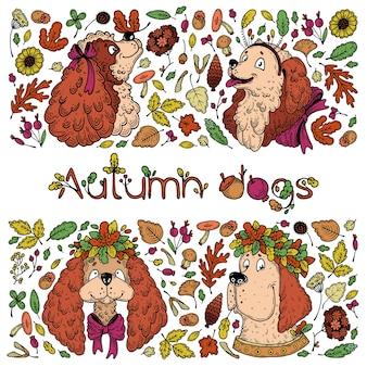 Cães de outono, conjunto.